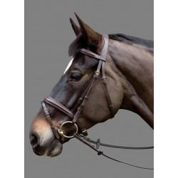 Bridon Fairytale MOUNTAIN HORSE