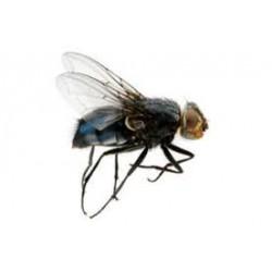 Produits anti-insectes