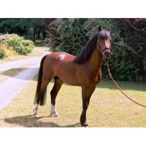 Matériel d'équitation pour double poney