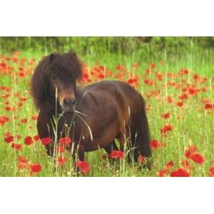 Matériel d'équitation pour poney shetland shetty