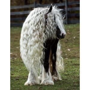 Soins de la crinière et de la robe cheval