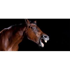 Efforts et récupération cheval