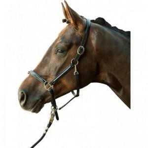 Licol pour poney au Meilleur Prix