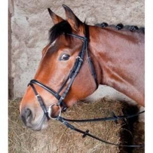 Bridon cheval ou poney shetland Au Meilleur Prix