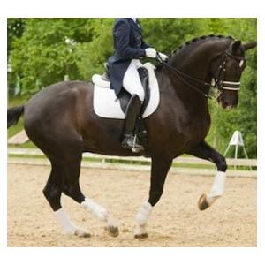 Vêtement équitation pour le dressage, frack ou mini-frack pour le cavalier