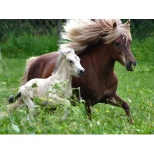 Matériel d'équitation poney et poulain au meilleur prix