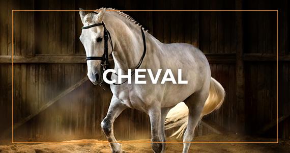 Matériel d'équitation pour le cheval